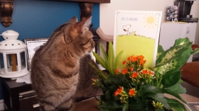 Mister Miao investigating flowers